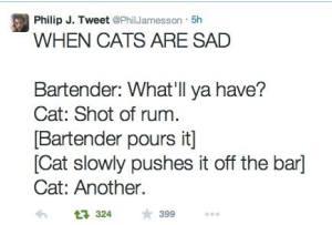 cat in a bar